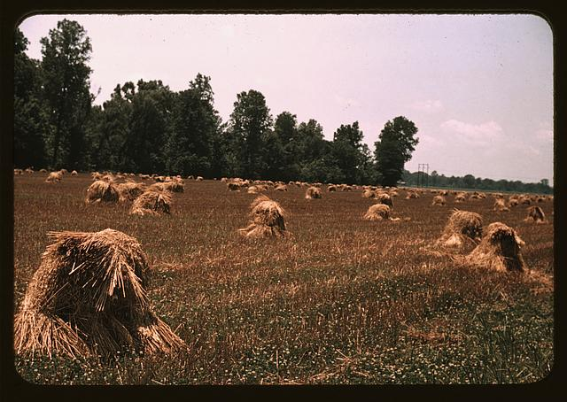 Typical southeastern Georgia farm with newly harvested field of oats (May 1939)
