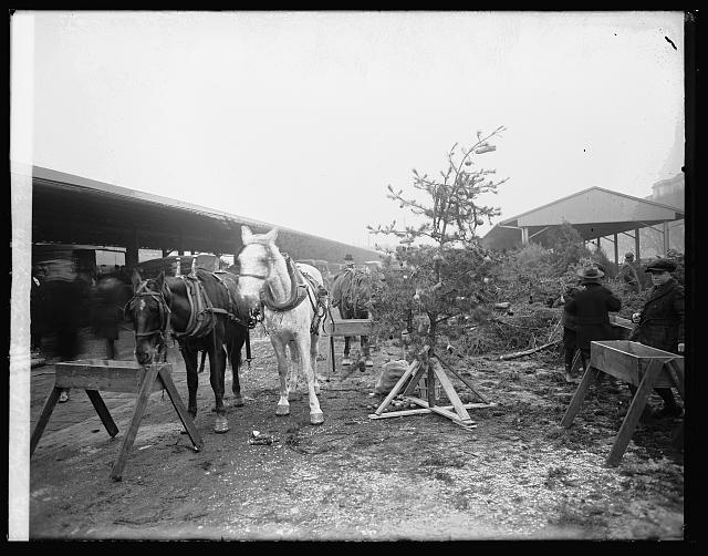 Horse Christmas tree, 1919