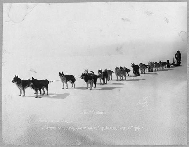 John Johnson dog team, winners of the Seventh All Alaska Sweepstakes, April 13, 1914