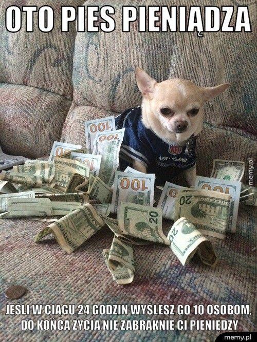 Pies Pieniądza Memy Pl