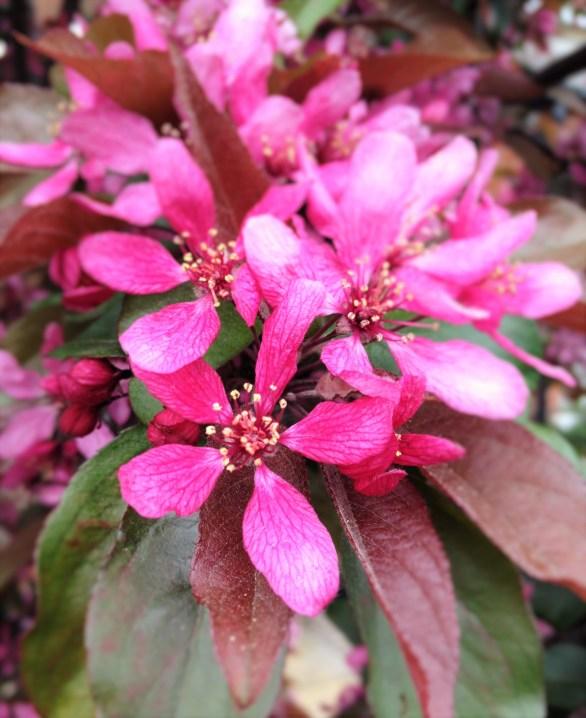 adela galasiu blossoms 8