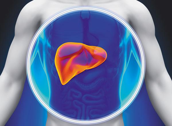 Fatty liver_MenElite