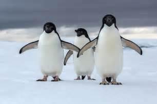 Antarctica and an increasingly warming world