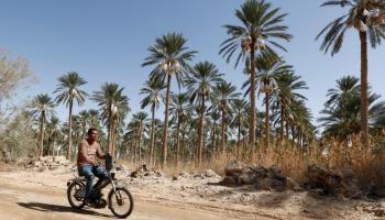 Where does the MENA region's food comes from?