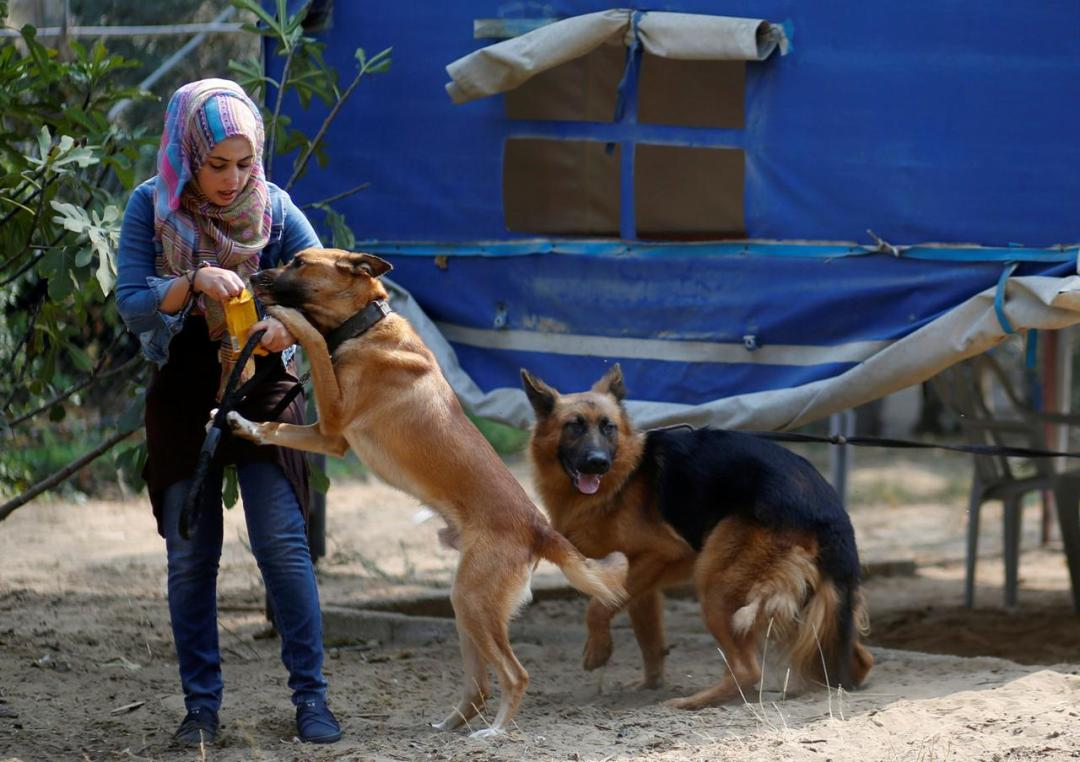 Gaza's growing pet population stretches scant vet resources Palestinians turning to pets caring for emotional comfort