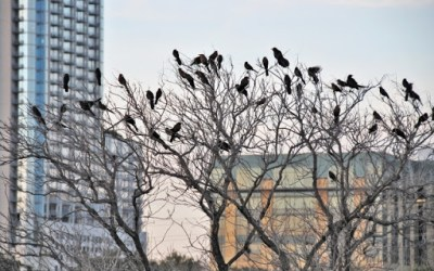 Buildings kill millions of birds. Here's how to reduce the toll
