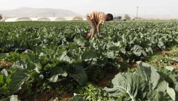 Water, energy and food security key to MENA stability
