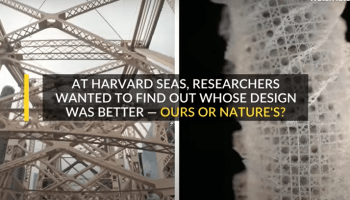 Skyscrapers Will Be Built Like Sponges