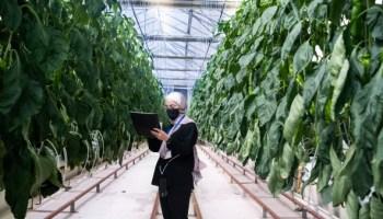 Jordanian women trained on modern agricultural technology