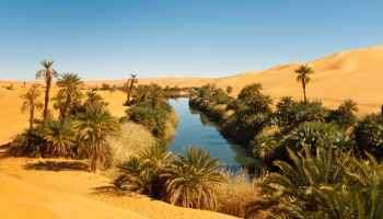 Paradox lost: Wetlands can form in Deserts