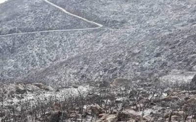 Algeria suffers from devastating wildfires