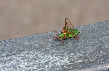 How Pests Can Destroy Your Business