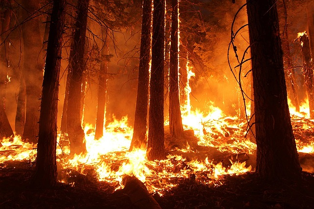 How People and Businesses Stepped Up During California's Wildfires
