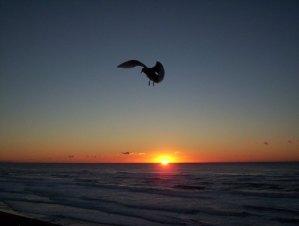 QuickBooks_sunset