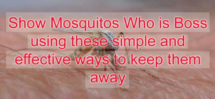 mosquito repellent #mendooutdoors