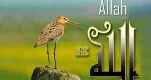 zikr, zikrullah, spominjanje Allaha
