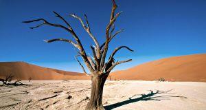 drvo, priroda