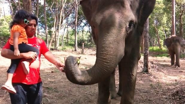 Papa dan Kenzie memberi pisang ke Vina di Safari Lagoi Bintan. Foto by menixnews.com