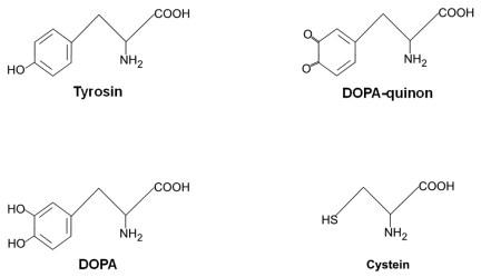 Vigtige kemiske forbindelser, der indgår i melaninsyntesen