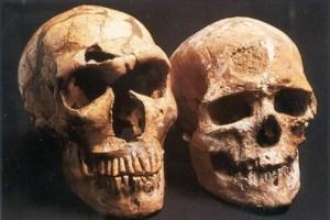 La Ferrassie (neandertaler, ca. 60.000 år) og Cro-Magnon (Homo sapiens, ca. 30.000 år)