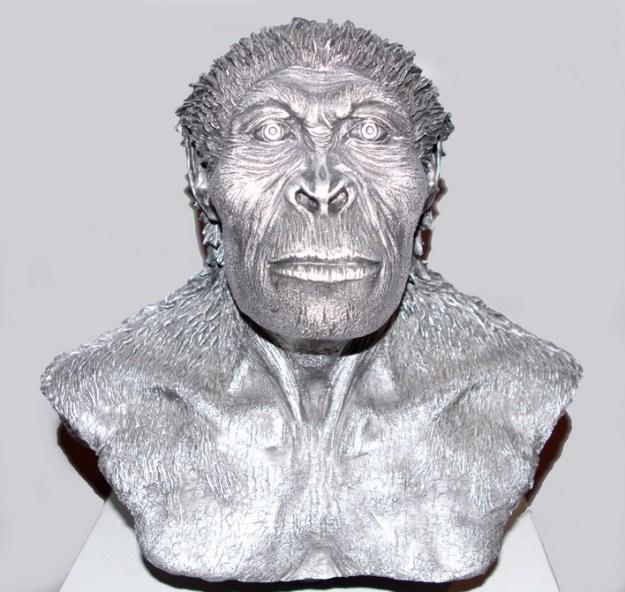 Gracil australopithecin