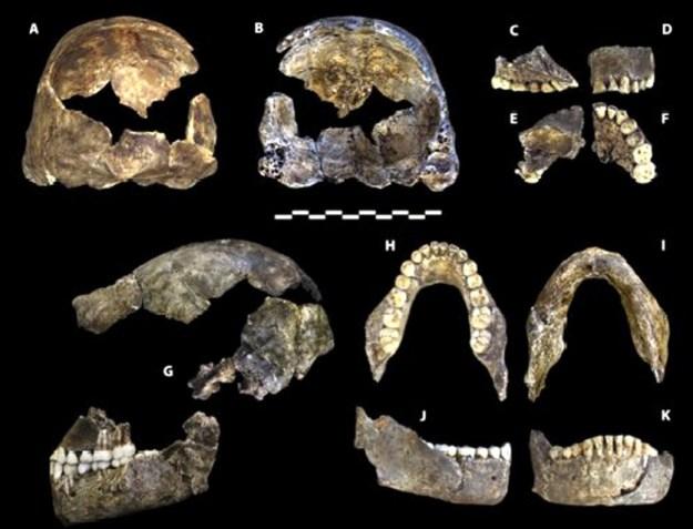 Kranie, kæber og tænder fra Dinaledi hominin 1 (DH1)