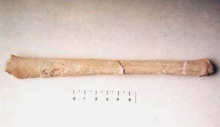 En rørknogle fundet ved Venta Micena, Stammer fra et pattedyr (en hjort?)