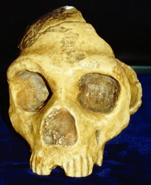 Kraniet fra Forbes' Mine fundet 1848.