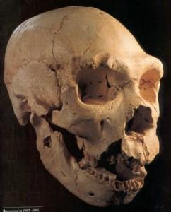 Det bedst bevarede kranium fra Sima de los Huesos - SH5