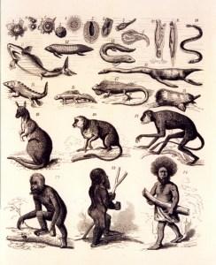 Illustration fra Natürliche Schöpfungsgeschichte
