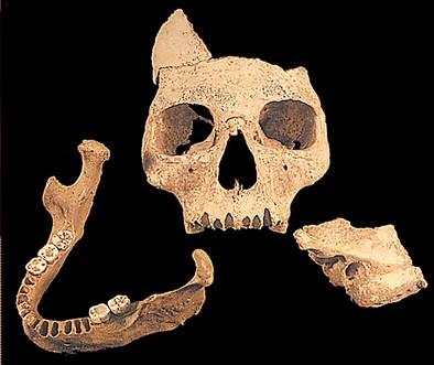Tidlig Homo sapiens. Pestera cu Oase, Rumænien., ca. 42.000 år. Ca. 10% af DNA'et,d er er udvundet fra fossilet, stammer fra neandertalere. Pestera cu Oase menneskene uddøde uden at give ophav til Europas nuværende befolkning.