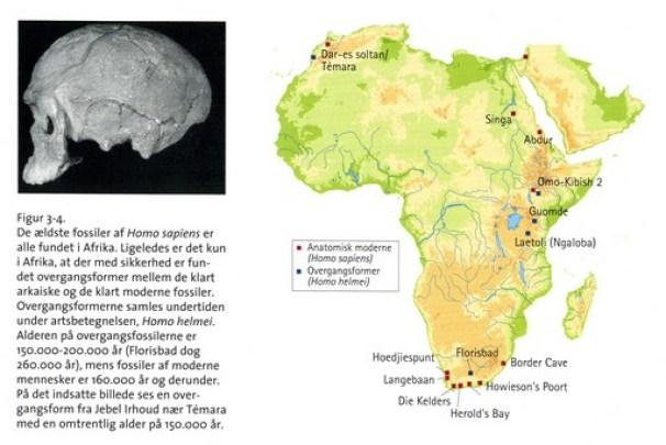 Moderne og nær-moderne fossiler fudnet i Afrika