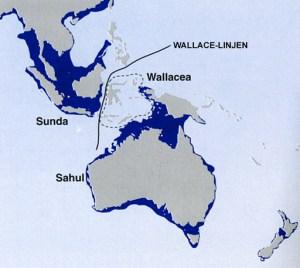 Wallacea afgrænses af Wallace-linjen mod vest og Lydekker-linjen mod øst. Figuren viser også, hvilke landområder,d er var sammenhængende under sidste istid