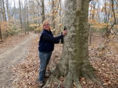 Cathy Sachs documents the GPS coordinates of this lovely beech tree in the woods at Menokin.
