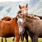 hulpverlening Therapie met paarden: diagnostiek en hulpverlening
