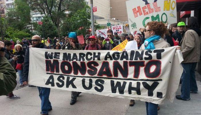 «Αν σπείρεις μια φορά, δεν υπάρχει γυρισμός»: Οι σπόροι της Monsanto που κρατούν για πάντα δέσμιους τους αγρότες