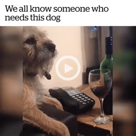 Dog Pushing Hand Down When Owner Gets a Drink of Wine Featured
