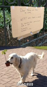 Dog Stealing Potted Plant