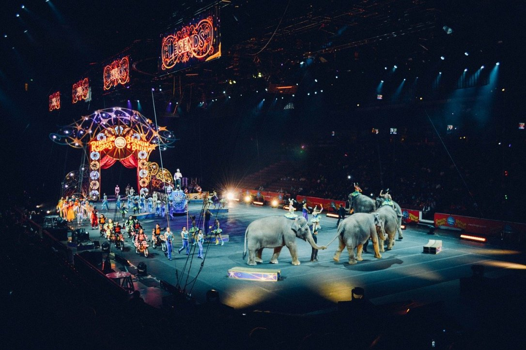 circus stage with elephants