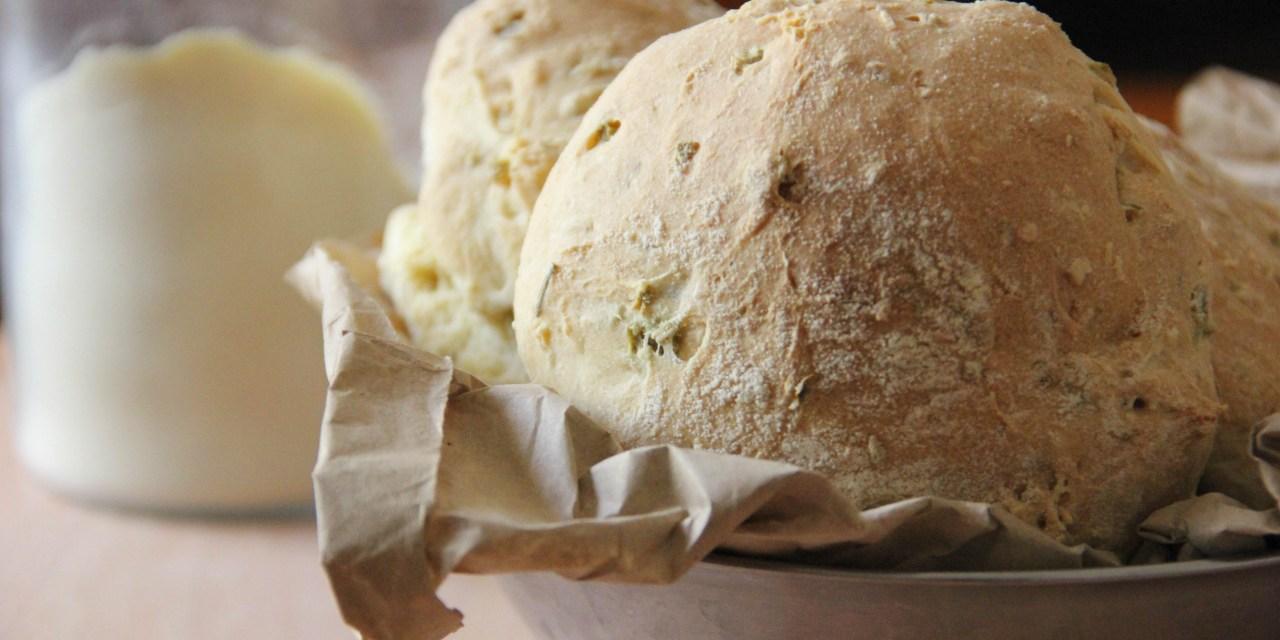 Panini alle olive e rosmarino: quando la bontà incontra la tradizione.