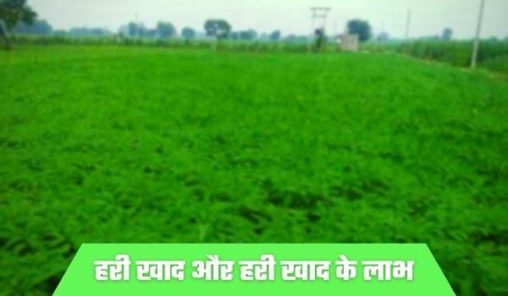 हरी खाद क्या है Hari Khad Kya hai