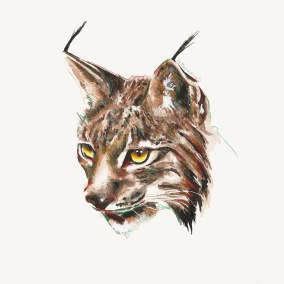 Lynx (Study)