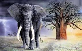 Arti Mimpi Gajah: 6 Tafsir Mimpi seputar Gajah
