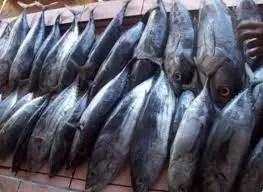 Cara Membuat Resep Ikan Tuna Cabe Ijo Lezat dan Sederhana