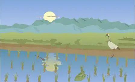 Primbon arti mimpi padi di sawah
