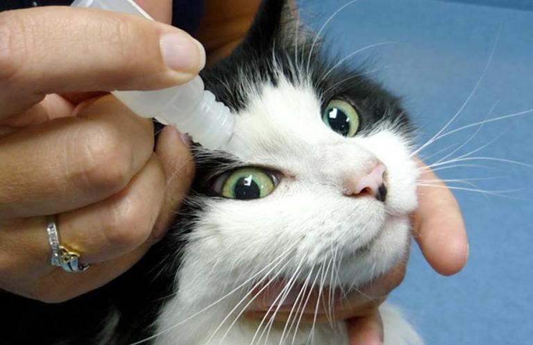 Mata kucing belekan/ bernanah