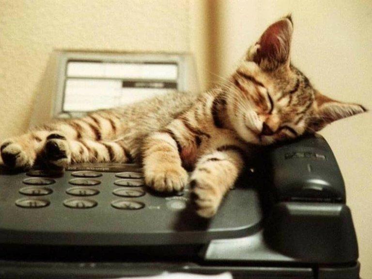 Kucing menunggu telepon