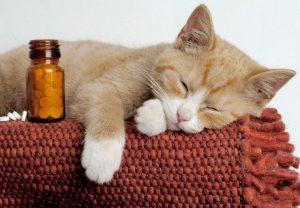 ciri ciri kucing sakit
