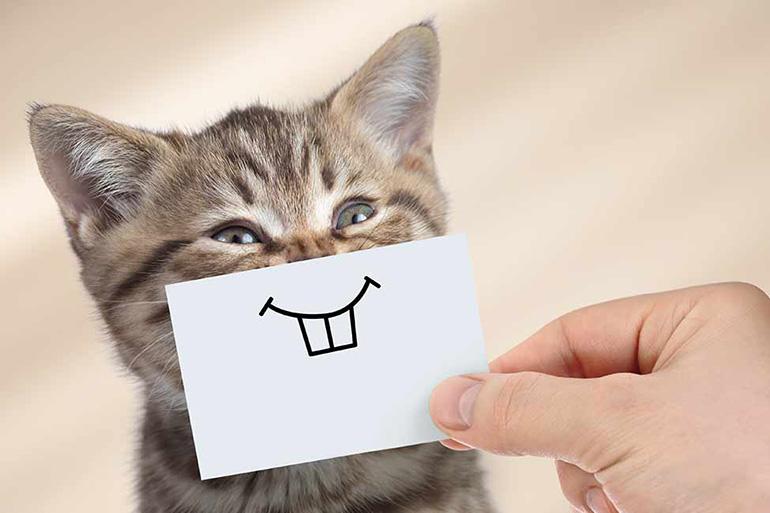 cara membahagiakan kucing