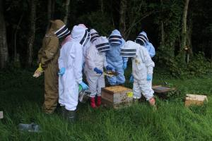 Apiary Practical Course